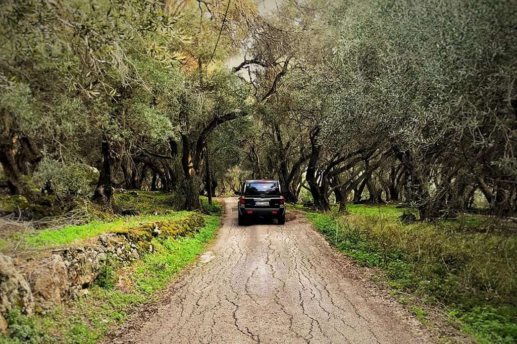 Olive Trees Corfu | X Adventure Club Corfu